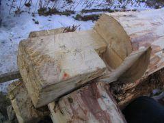 Лапа с коренным шипом